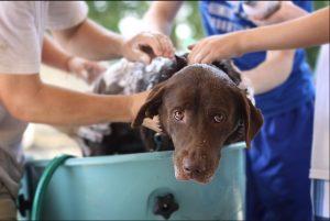 lavado de mascotas a domicilio